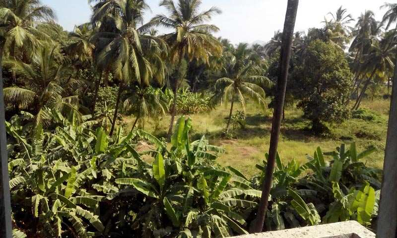 10000 sq feet bungalows villas for sale in viva college for Guntha to sq ft