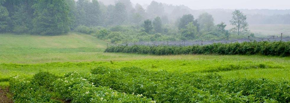The Organic Farms, Sikar - Agricultural Farm/Land/Villas and Resorts