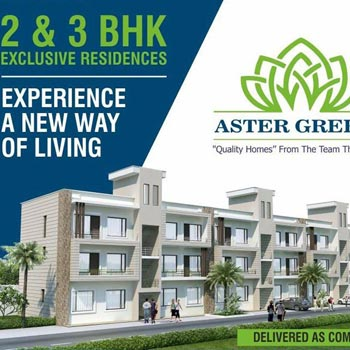 Aster Greens