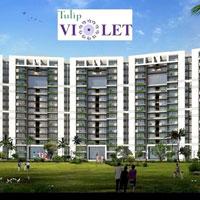 Tulip Violet - Gurgaon - Sohna Road, Gurgaon