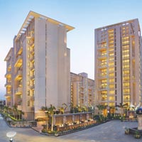The Hibiscus - Sector 50, Gurgaon