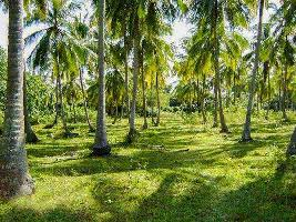 Farm Land for sale in Gobichettipalayam, Erode   Buy/Sell
