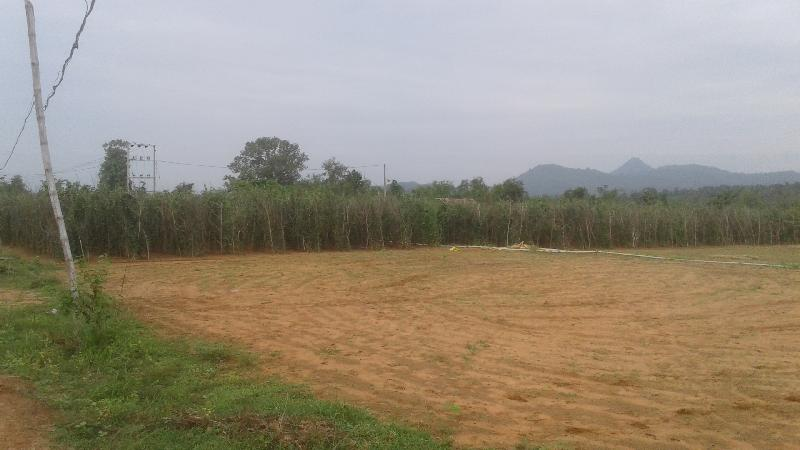 2 BHK Farm House for Sale in Nayagarh - 6 Acre
