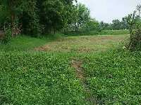 22000 Sq.ft. Farm Land for Sale in Vasad, Anand