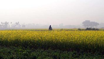 4 Acre Farm Land for Sale in Pehowa, Kurukshetra