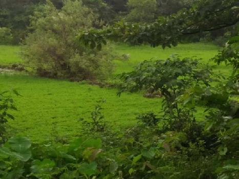 8 Acre Residential Plot for Sale in Dapoli, Ratnagiri