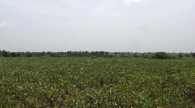 5 Acre Farm Land for Sale in Teosa, Amravati