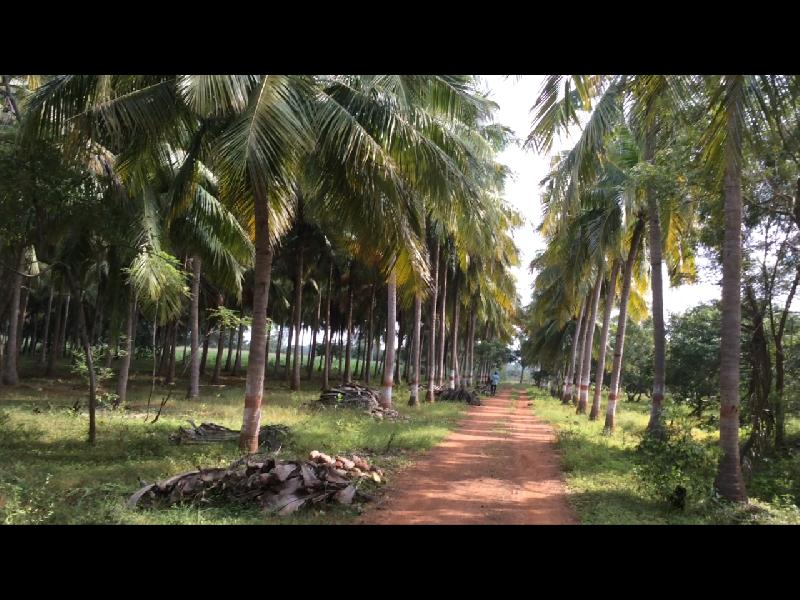 Farm Land for Sale in Trichy - 52 Acre