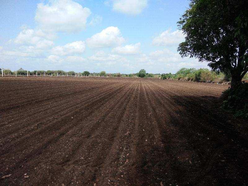 Agricultural/Farm Land for Sale in Junagadh - 14 Bigha