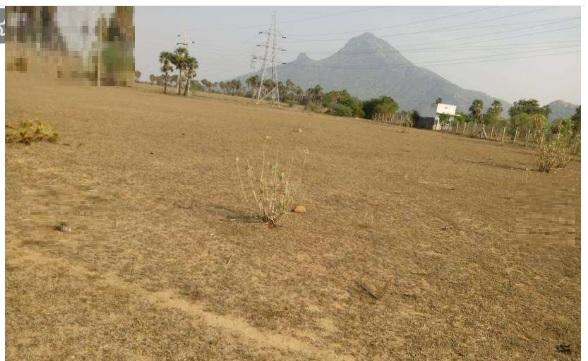 Residential Plot for Sale in Tiruvannamalai - 8200 Sq. Feet