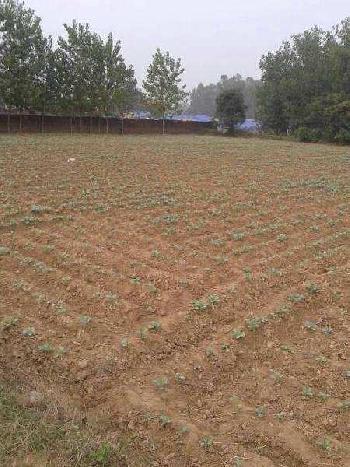 68 Sq. Yards Residential Plot for Sale in Hari Nagar, Delhi