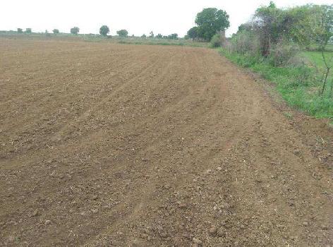 6 Bigha Farm Land for Sale in Dholka, Ahmedabad