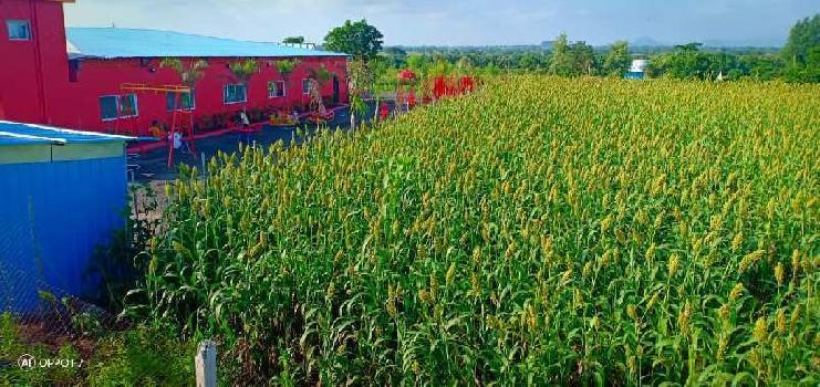 80 Acre Farm Land for Sale in Satana, Nashik