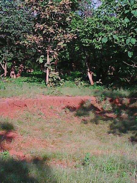 Agricultural/Farm Land for Sale in Bodeli, Chhota Udaipur - 32 Bigha