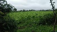 2.93 Acre Farm Land for Sale in Amla, Betul