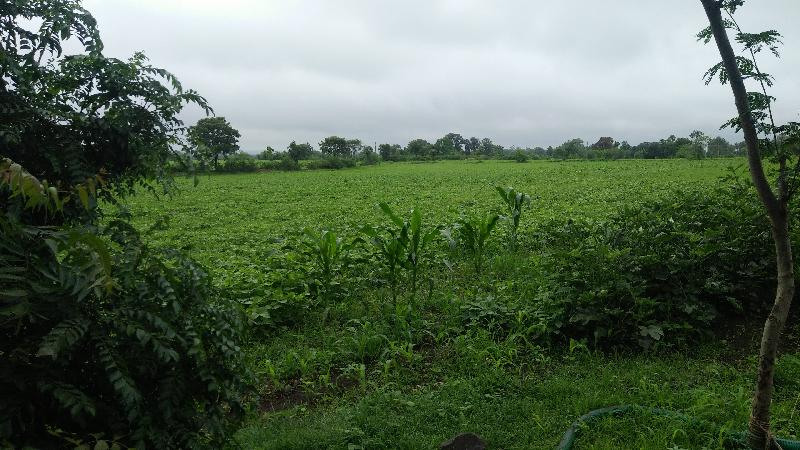 Agricultural/Farm Land for Sale in Amla, Betul - 2.93 Acre