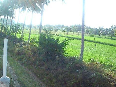 5 Ares Farm Land for Sale in Krishnarayapuram, Karur