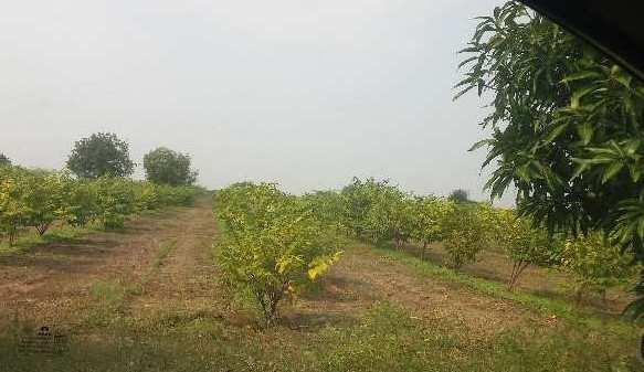 4 Acre Farm Land for Sale in Jamkhed Road, Ahmednagar