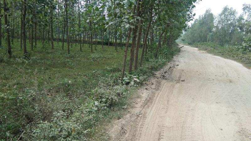 Agricultural/Farm Land for Sale in Biharigarh, Dehradun - 10 Bigha
