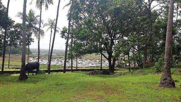 Residential Plot for Sale in Panjim - 7800 Sq. Meter