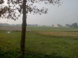 Farm Land for sale in Purnia | Buy/Sell Agricultural Land in