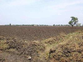 Farm Land for sale in Nalanda | Buy/Sell Agricultural Land