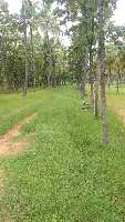 70 Acre Farm Land for Sale in Malur, Bangalore