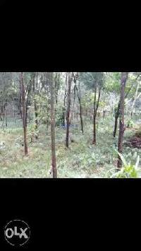 20 Cent Residential Plot for Sale in Thiruvalla, Pathanamthitta