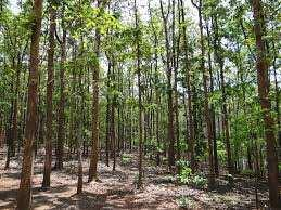 97 Acre Farm Land for Sale in Parseoni, Nagpur
