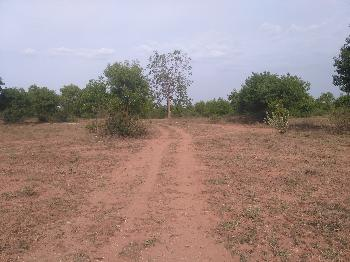 34 Cent Farm Land for Sale in Chengam, Tiruvannamalai