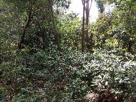1 Acre Farm Land for Sale in Kotagiri, Ooty