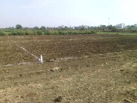 13 Bigha Farm Land for Sale in Etmadpur, Agra