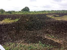 Farm Land for sale in Mahbubnagar | Buy/Sell Agricultural Farm Land