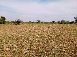 20 Acre Farm Land for Sale in Sira