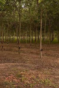 Farm Land for sale in Sawantwadi, Sindhudurg | Buy/Sell