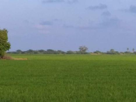 5 Acre Farm Land for Sale in Machilipatnam, Krishna
