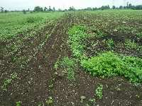 4 Acre Farm Land for Sale in Chandur Bazar, Amravati