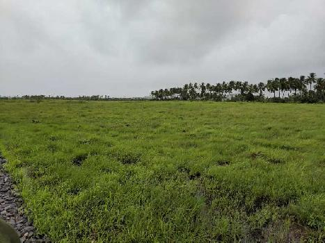 10 Acre Farm Land for Sale in Bhilad, Valsad