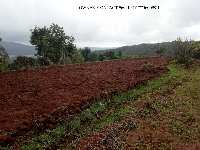 Farm Land for sale in Kolhapur | Buy/Sell Agricultural Land