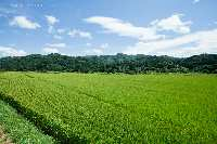 33 Acre Residential Plot for Sale in Bishnupur, Imphal