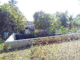 Farm Land for sale in Madurai   Buy/Sell Agricultural Farm Land in