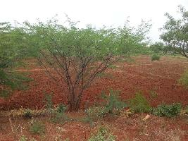 Farm Land for sale in Madurai | Buy/Sell Agricultural Farm Land in