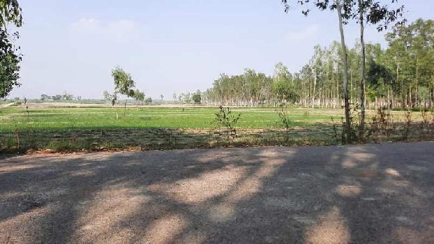 20 Bigha Farm Land for Sale in Garhmukteshwar, Hapur