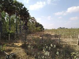 1 Acre Farm Land for Sale in Puduvayal, Sivaganga