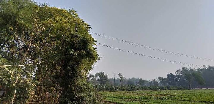 6 Bigha Farm Land for Sale in Kapadvanj, Kheda