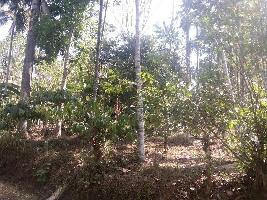 50 Cent Farm Land for Sale in Kenichira, Wayanad