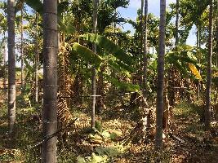 7.10 Acre Farm Land for Sale in Hiriyur, Chitradurga