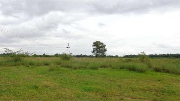 10649 Sq. Yards Farm Land for Sale in Dholera, Ahmedabad