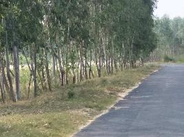 Farm Land for sale in Delhi | Buy/Sell Agricultural Land in