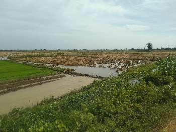 7 Acre Farm Land for Sale in Budalur, Thanjavur